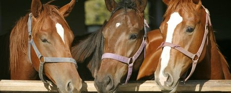 Horses have been taught to communicate with humans | Convincingly Contrarian Crumbs | Scoop.it
