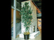 Artificial Deciduous Trees | Home Improvement and Lifestyle | Scoop.it