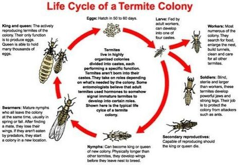 Do Termites Die in the Winter? Lacey Extermination Company Shares the FACTS and offers additional tips | All Things New Jersey | Scoop.it
