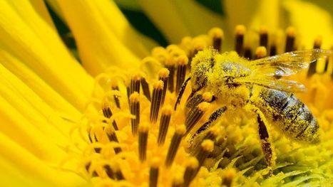 Le numéro un européen du miel se mobilise contre les pesticides | Des 4 coins du monde | Scoop.it