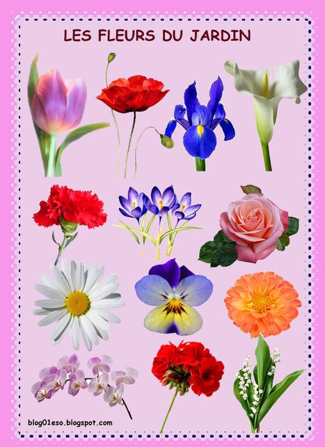 TULIPE, Géranium, Coquelicot, Iris, Muguet, crocus, Marguerite | FLE (ressources) | Scoop.it