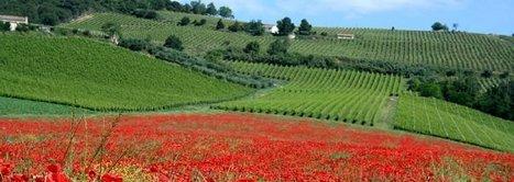 Percorsi di Vino: Slow Wine 2014 e la Liguria | Vinitours | Scoop.it