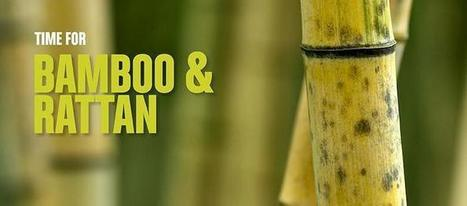 Bamboo and rattan: protecting the environment and bringing income to rural communities | Natural Capital | Scoop.it