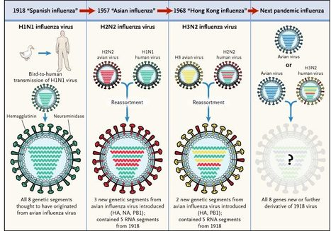Circulating Avian Influenza Viruses Closely Related to the 1918 Virus Have Pandemic Potential   Amazing Science   Scoop.it
