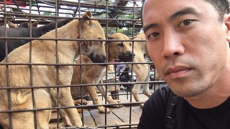 Un homme libère 1 000 chiens au festival de viande canine de Yulin | Nature Animals humankind | Scoop.it