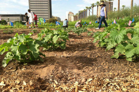Phoenix Project to Turn Vacant Lots into Community Spaces | Earth911.com | CALS in the News | Scoop.it