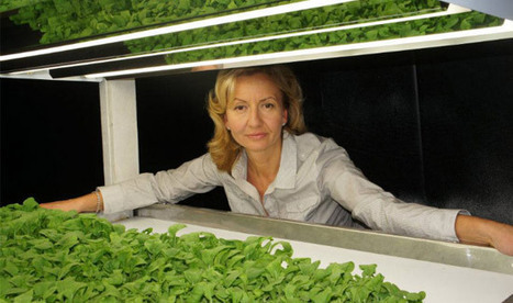 An Organic Vertical Farming Success Story | Healthy Recipes and Tips for Healthy Living | Scoop.it