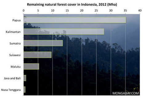 Despite high deforestation, Indonesia making progress on forests, says Norwegian official | Forests | Scoop.it