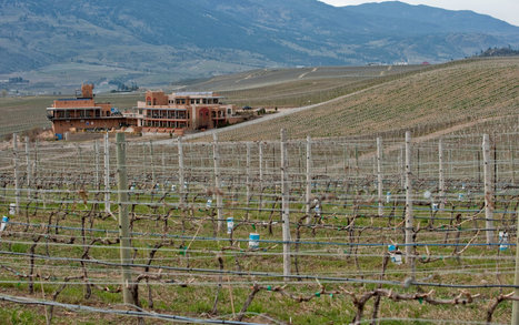 Scientists Question Impact as Vineyards Turn Up in New Places   Sustain Our Earth   Scoop.it