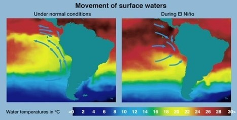 El calentamiento global podría cambiar la fuerza del fenómeno meteorológico de El Niño — Noticias de la Ciencia y la Tecnología (Amazings®  / NCYT®)   Medio Ambiente   Scoop.it