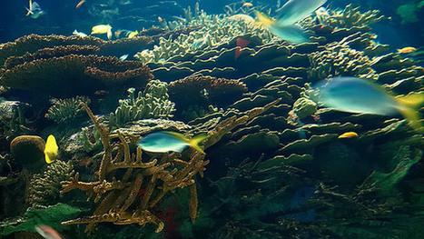 Universidad de Antioquia | Introducción a la Oceanopolítica | Un poco del mundo para Colombia | Scoop.it