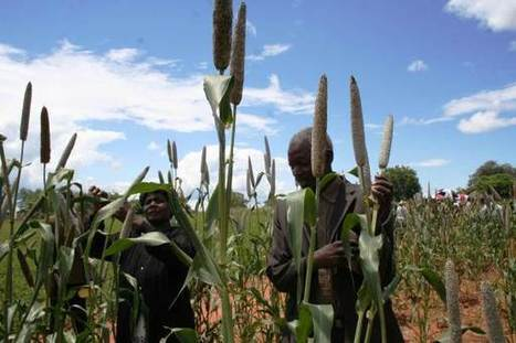 Zimbabwean 'wizard' bewitches a bumper crop amid drought | Thomson Reuters Foundation | CGIAR Climate in the News | Scoop.it