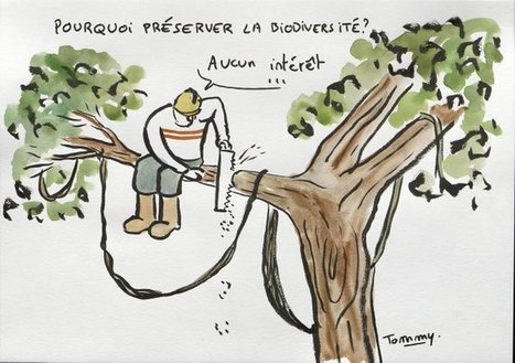 Pourquoi conserver les espèces ? | Muséum d'histoire naturelle du Havre | EntomoScience | Scoop.it