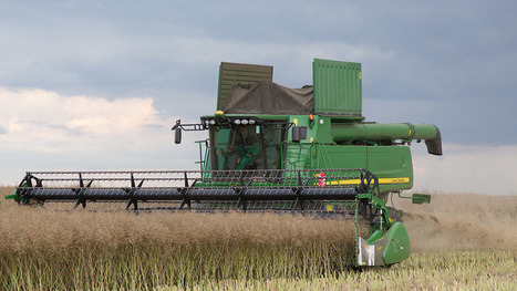 UK rapeseed production slumped by nearly one third - Farmers Weekly | Agrarforschung | Scoop.it