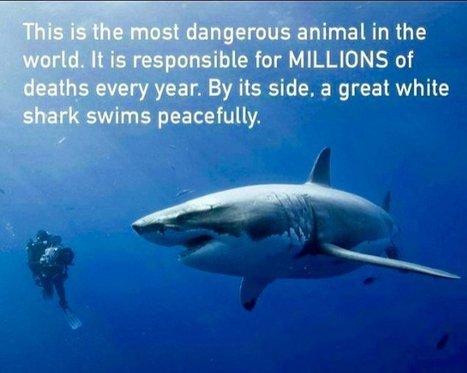 The most dangerous animal in the world - Richard Branson | Interesting Reading | Scoop.it