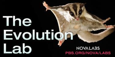 wEvolution Lab | NOVA Labs | PBS | Views of Evolution | Scoop.it