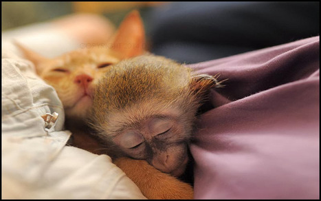 This Adorable Orphaned Baby Monkey Was Rescued, Raised, And Then Released Into The Wild | Protect our oceans | Scoop.it