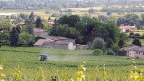 Le Bourg-Dun (76). Visite et projection-débat d'Insecticide, mon amour | Les colocs du jardin | Scoop.it