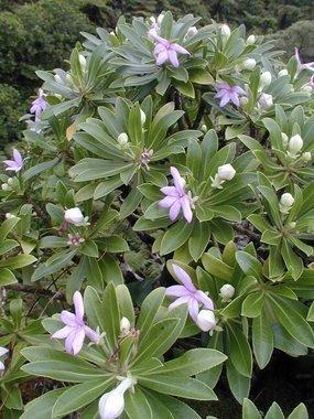 24H dans le Pacifique:Marquises: une bien belle récolte pour les botanistes | Biodiversité NC | Scoop.it