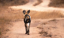 On safari in South Africa with the Been there travel photography winner - The Guardian | Photography Roundup | Scoop.it
