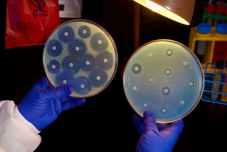 In 2050, superbugs may kill 1 person every 3 seconds, report warns | Limitless learning Universe | Scoop.it