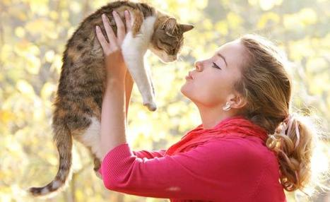 Kedici misiniz, Köpekçi mi? - Sağlıklı Yaşam - Spor Life | SporLife.net - SAĞLIKLI YAŞAM | Scoop.it