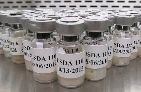 USDA ARS Fixing Nitrogen for the World | Plant-Microbe Symbiosis | Scoop.it