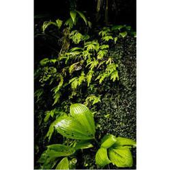 Jardines Verticales | Jardines Verticales y azoteas verdes. | Scoop.it