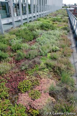 Graviland-Expert : la végétalisation semi-intensive de toit-terrasse adaptée à chaque région | Immobilier | Scoop.it