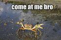 Seven Come At Me Bro Ocean Animals | Marine Biology | Scoop.it