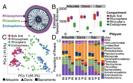 PNAS: Structure, variation, and assembly of the root-associated microbiomes of rice | Plant nutrition & stress | Scoop.it