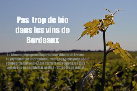 Pas trop de bio dans les vins de Bordeaux | | Vin, Culture & Société : articles, conférences, dossiers... en ligne | Scoop.it