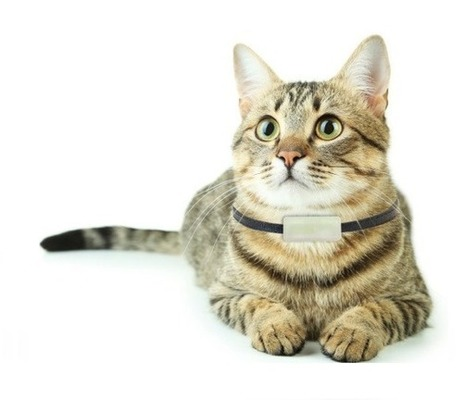 The best GPS trackers and collars for cats | Notebook | Scoop.it