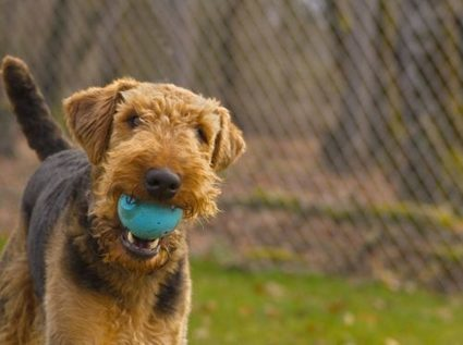 4 Ways To Interact With An Unfamiliar Dog | Animal Bliss | Animal Welfare | Scoop.it