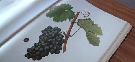 Les aventuriers des cépages perdus | Le Vin et + encore | Scoop.it