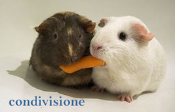 Sondaggio mls, condividere gli immobili | ImmobileIN | Scoop.it