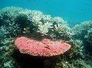 Warming oceans are 'sick,' global scientists warn | Focus on Biology | Scoop.it