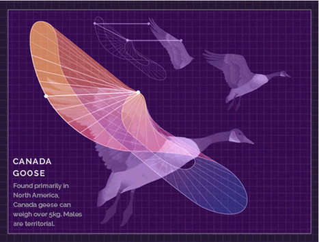 Glorious Biology GIFs Visualize The Secrets To Animal Flight | The Creators Project | Information Mapping | Scoop.it
