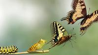 Wie der Wandel in Unternehmen gelingt - WirtschaftsWoche | KKundK - Technology and Change | Scoop.it