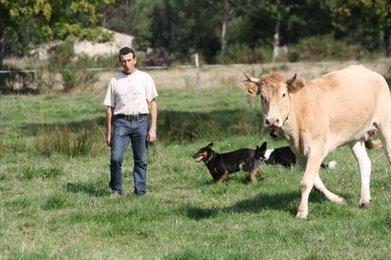 Eleveur de bovins, un métier passion   Agriculture en Gironde   Scoop.it