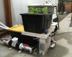 aquaponic- IOT device -- Balcony Garden | Aquaponics~Aquaculture~Fish~Food | Scoop.it