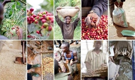 From Problem to Opportunity in Coffee-Reliant Burundi (Video)   Coffee News   Scoop.it