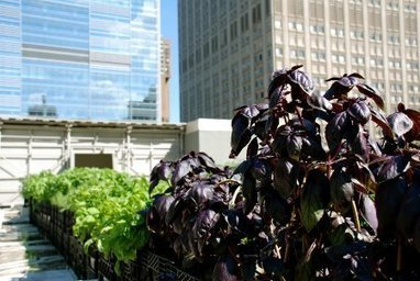 A Pop-Up Farm Opens in Midtown Manhattan - Environment - GOOD | Vertical Farm - Food Factory | Scoop.it