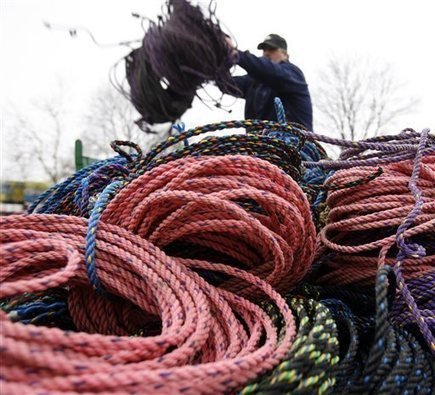 Colored lobster rope could be safer for whales - SunHerald.com | Rockland and Maine coast | Scoop.it