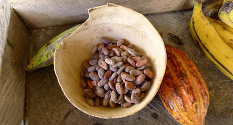 Cocoa, The Health Miracle | Medicine Hunter | LOCAL HEALTH TRADITIONS | Scoop.it