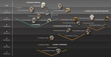 The origin of our species | Aux origines | Scoop.it