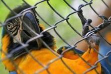 Brazil cracks down on lucrative wild animal trade | Wildlife Trafficking: Who Does it? Allows it? | Scoop.it