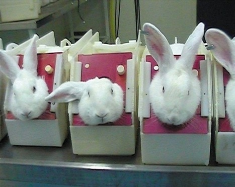 Leaping Bunny Cleaning Products That Dont Test On Animals | Global Animal | Nature Animals humankind | Scoop.it