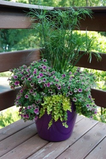 Attract birds and butterflies this gardening season | Container Gardening | Scoop.it