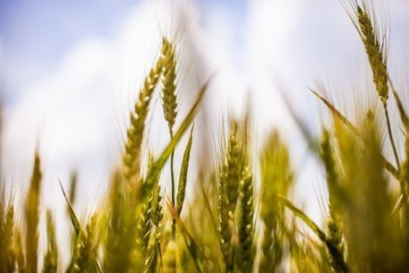 « Plan social » silencieux : des milliers d'agriculteurs abandonnent chaque année leur métier | Gardarem les paysans | Scoop.it